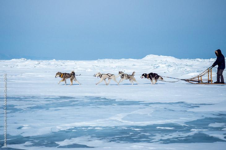 На собаках по Байкалу
