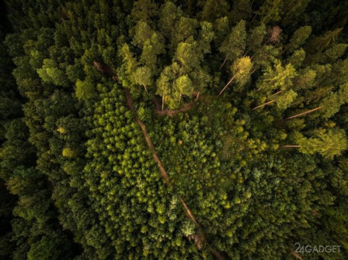 БПЛА станут лучшими спасателями для потерявшихся в лесу (3 фото + видео)