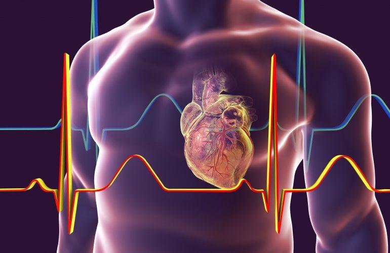 Эти привычки помогут сохранить здоровое сердце до самой старости