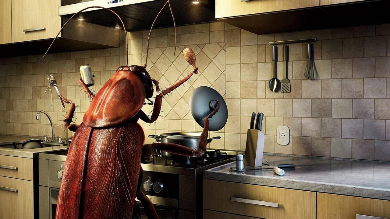 Несколько неожиданных способов избавления от тараканов