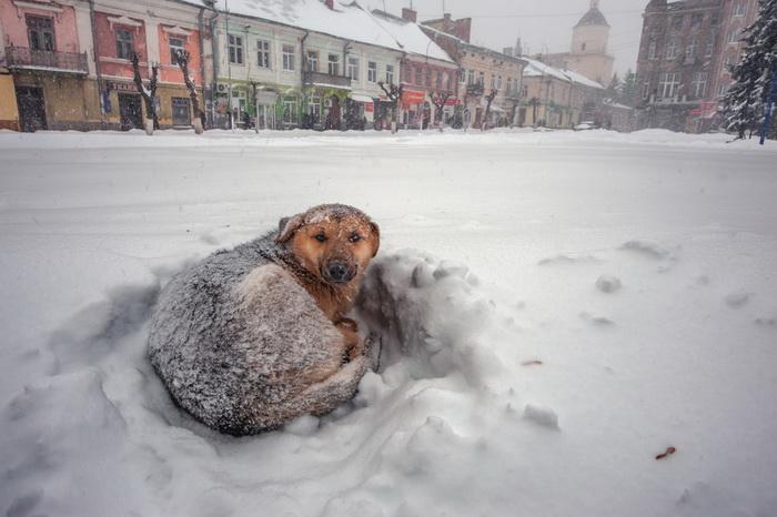 Российские города ранжировали по климатическому комфорту