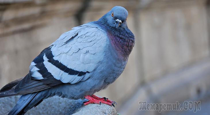 птицы с интеллектом