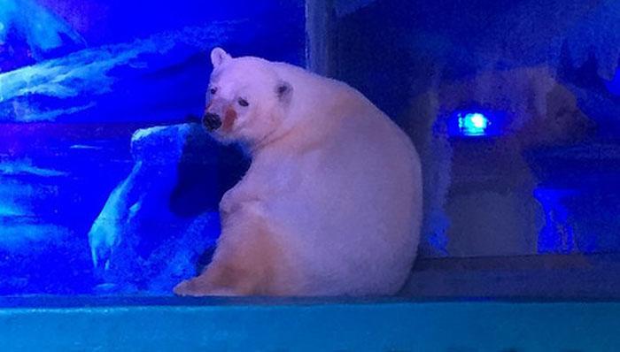Самый несчастный медведь в мире.