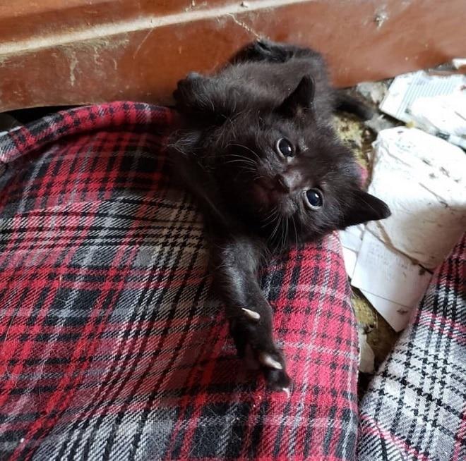 Хрупкий, облепленный блохами котенок едва не погиб, но добрая женщина со своим питомцем не допустили этого