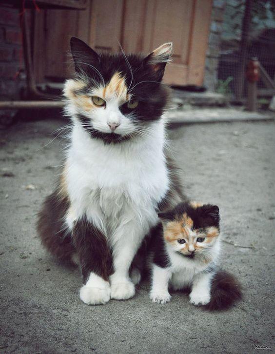 Сказать маме, что тебя обижают во дворе коты, милота, поведение, счастье, эмоции