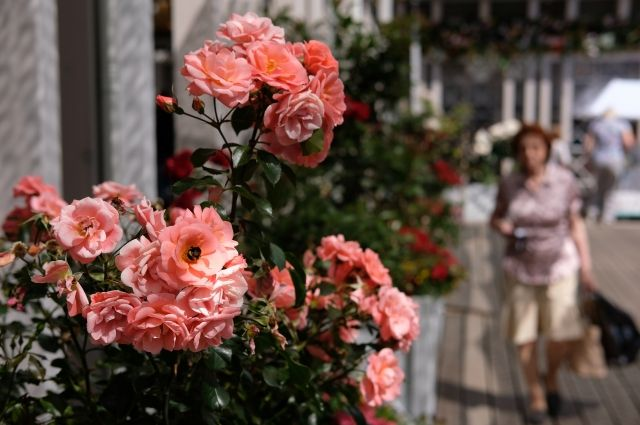 В столице завершается фестиваль «Цветочный джем»