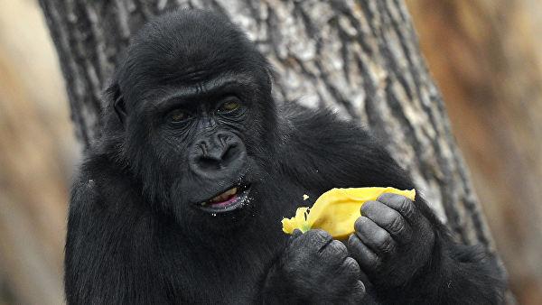 Экологи назвали точное число вымирающих видов животных