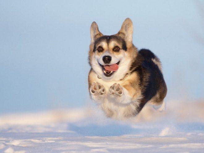 5 способов утомить вашу неугомонную собачку
