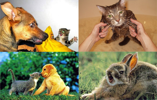 Ура! Пятница! Смешные стоп-кадры с животными