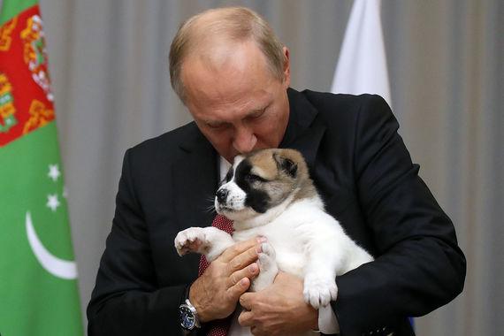 Путин в мире животных: 20 са…