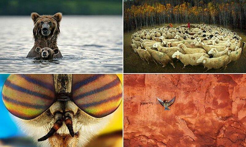 Потрясающие снимки с фотокон…
