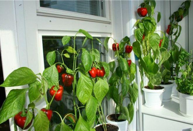 Натуральное хозяйство в условиях квартиры