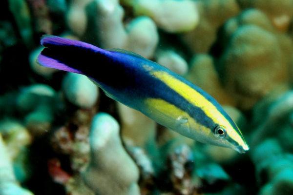Кто главный житель коралловых рифов?