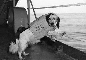 Собаки, которые приносят удачу