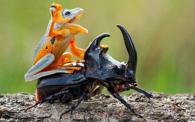 Забавные животные, которые любят, чтобы их катали верхом