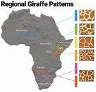 Never noticed giraffes had d…