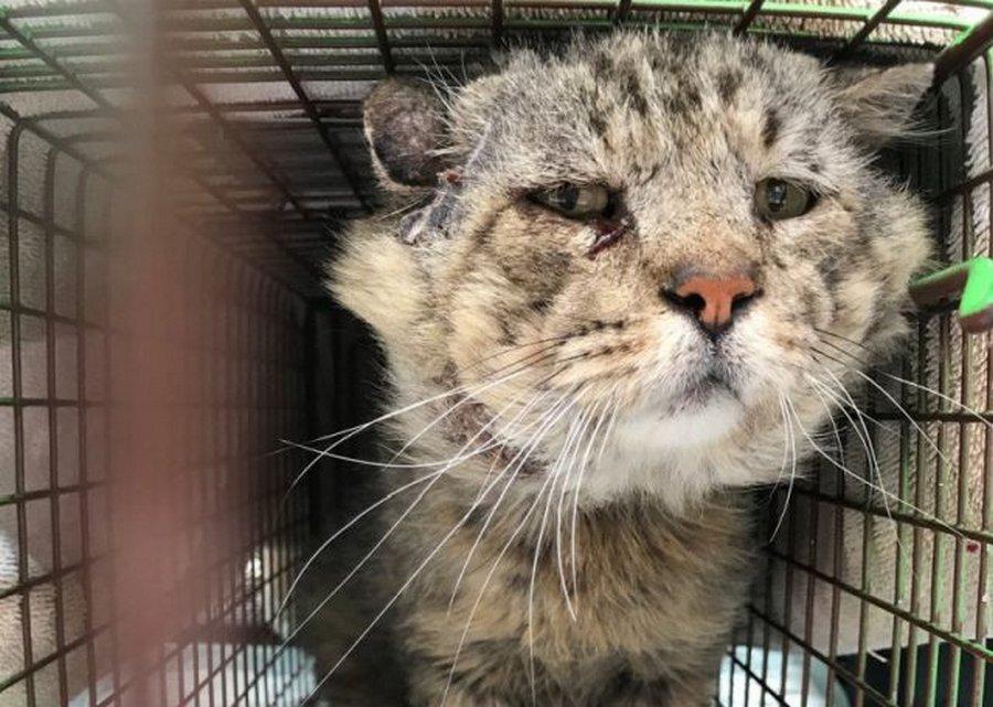10-летний бездомный кот обрел новый дом