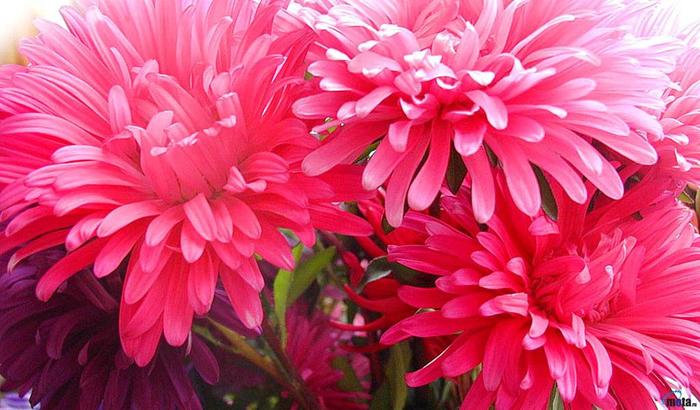 цвет, осени 16 (700x410, 401Kb)