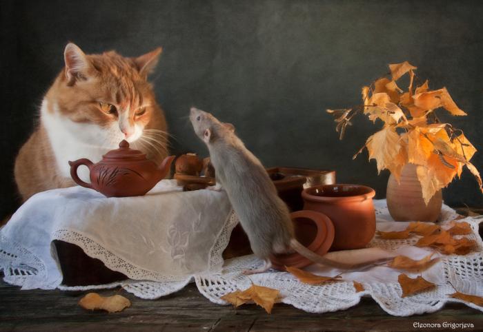 НатюрКотики, или «кошки-мышки» рижского фотографа Элеоноры Григорьевой