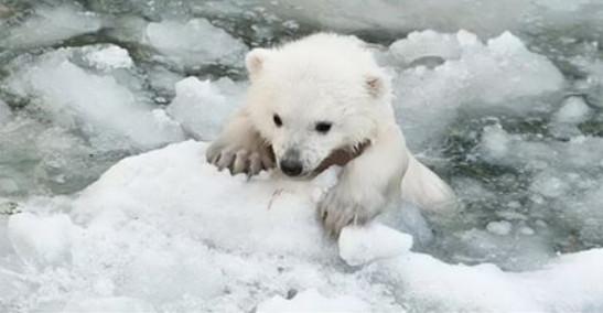Мама-медведица пыталась спасти медвежонка. Если бы не эти мужчины, малыш бы погиб...