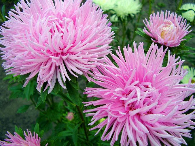 цвет, осени 15 (677x508, 365Kb)