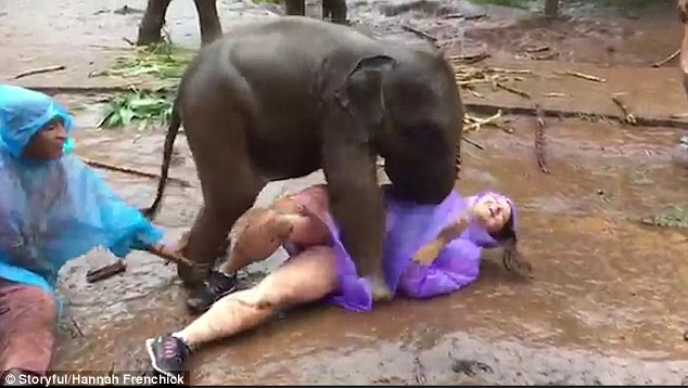 She begins to pat the elephants trunk, but the baby has other ideas and headbutts her body pushing her over