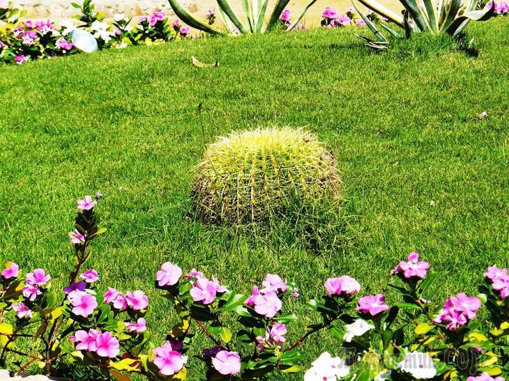 Сады и парки мира... сад Китченера
