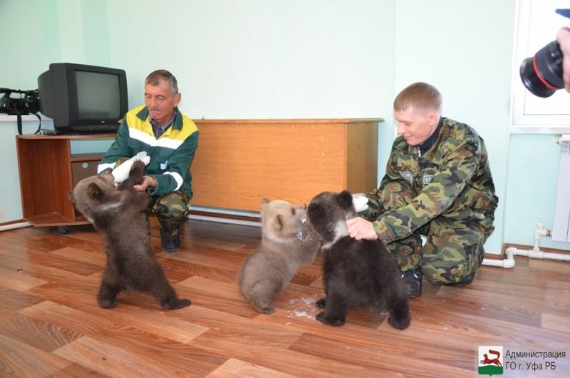 В уфимском зверинце родились четверо медвежат