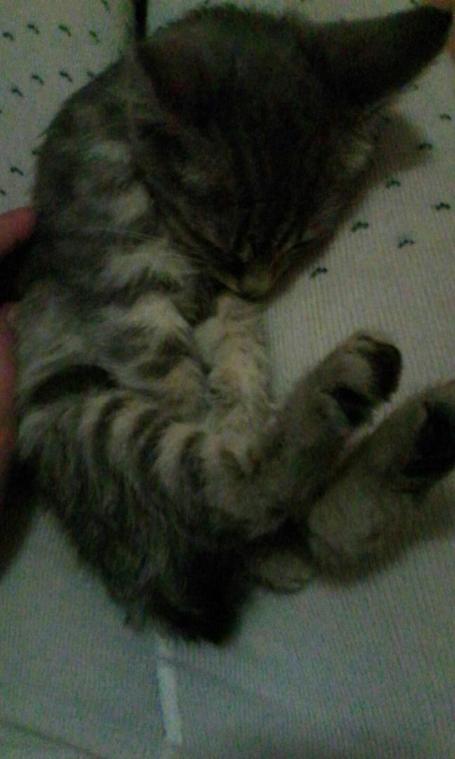 Ей оставалось жить пару дней… Кошечка с язвами на глазах весила 700 грамм и уже ни на что не надеялась