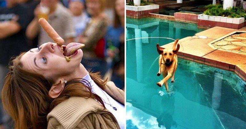 20 забавных происшествий, которые запечатлели в идеальный момент животные, идеальный момент, казус, нелепость, неприятность, смешно