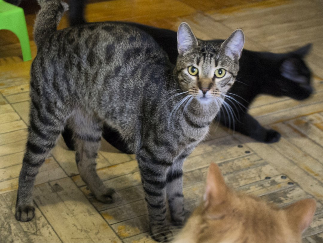 Каким должен быть настоящий кот? Смотрите