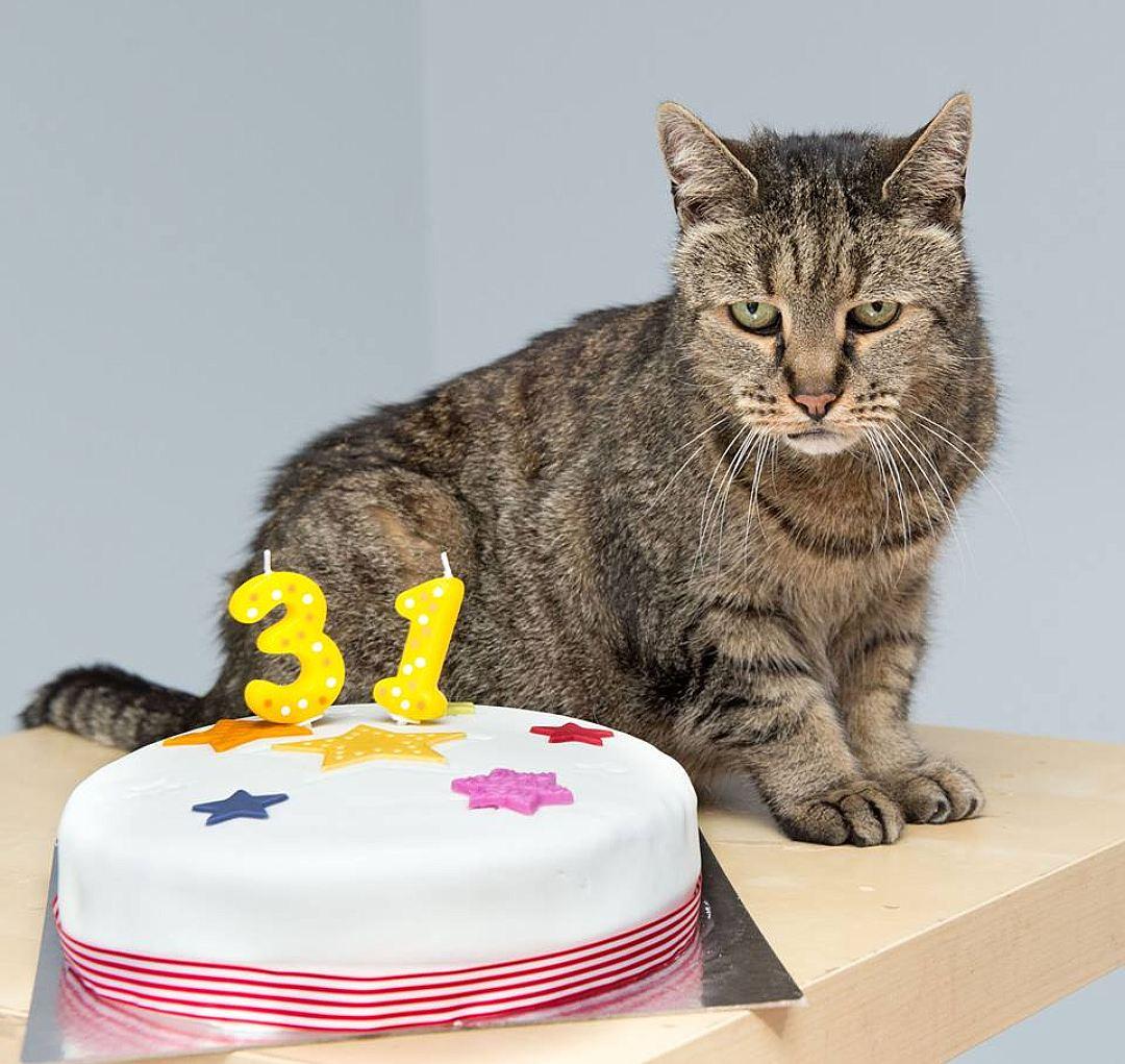 В Великобритании умер самый старый кот в мире