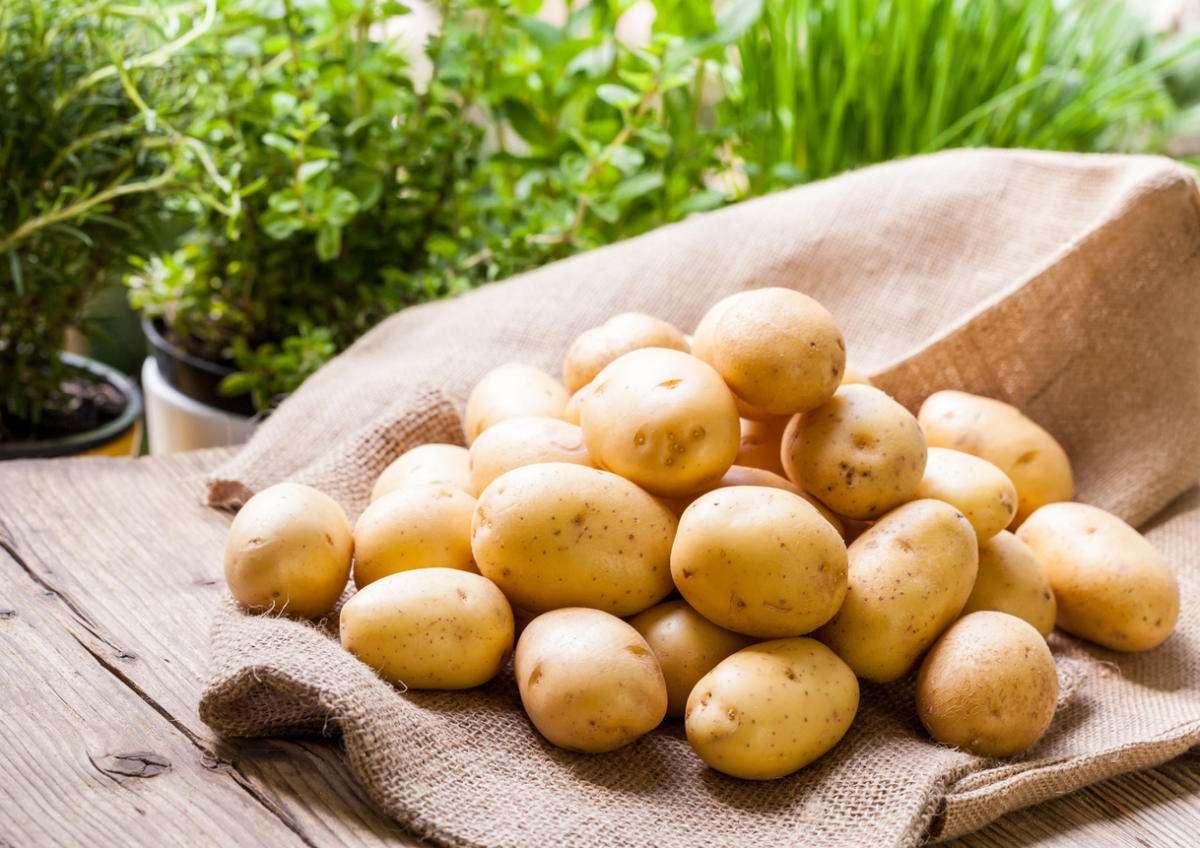 Секреты урожайной картошки