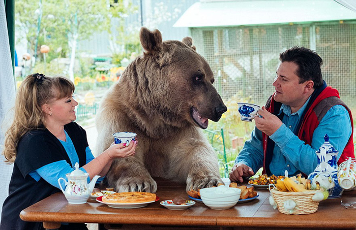 Домашний медведь Степан
