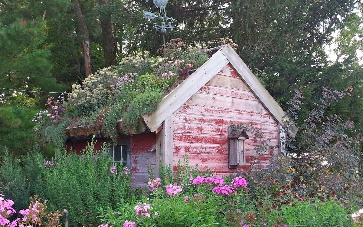 7 вариантов растений для зеленой крыши