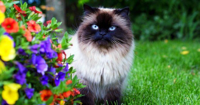 Таинственная кошка: мистические особенности очаровательных мурлык
