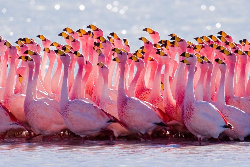 Фламинго — одни из самых древних видов птиц
