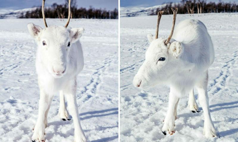 Норвежскому фотографу несказ…