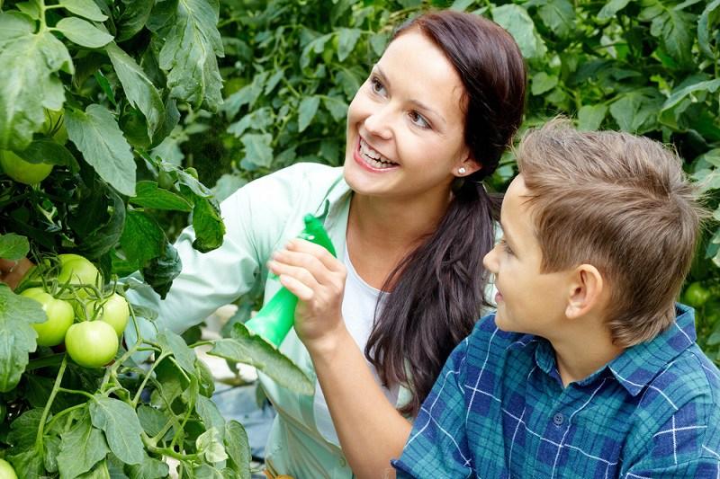 для чего опрыскивают растения борной кислотой