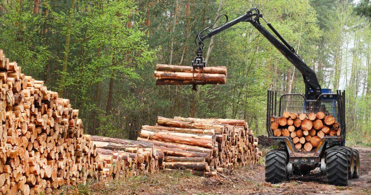 В Европу со своими дровами: Украина поменяла «безвиз» на «безлес»