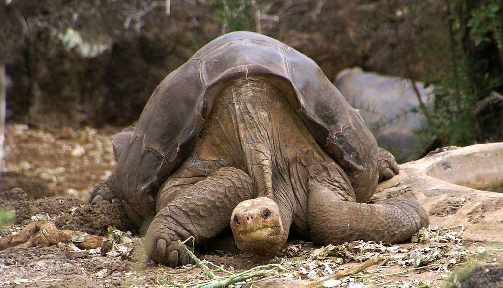 10 животных, которые вымерли за последние 10 лет