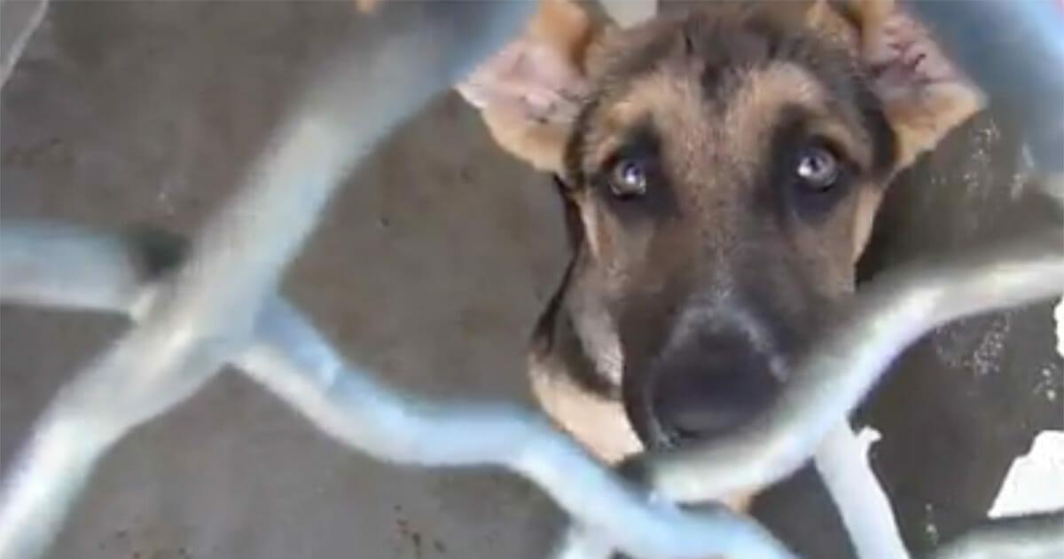 3-месячного щенка должны были усыпить, после того, как от него отказались владельцы