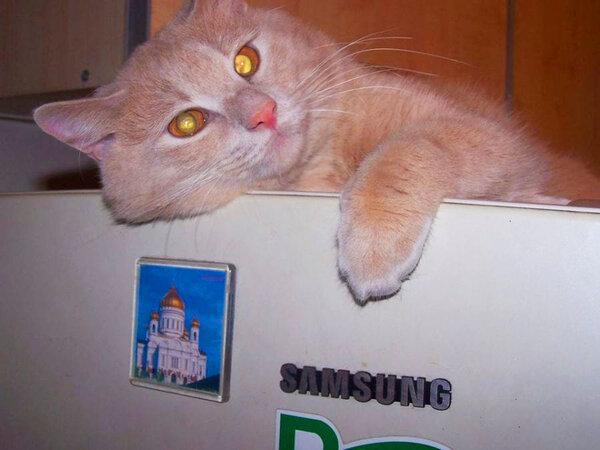 Как я кота у психотерапевта консультировал