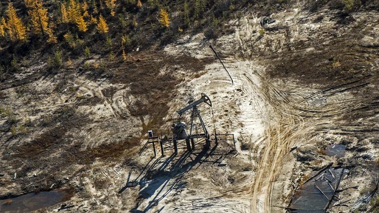 Оплошавшие нефтяники спилили деревья и воткнули стволы обратно