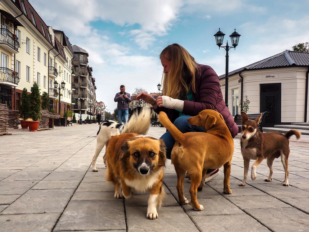 Блогеры и собакены на Кавказе