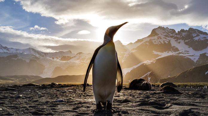 История об «эректоре пингвинов» покорила Сеть