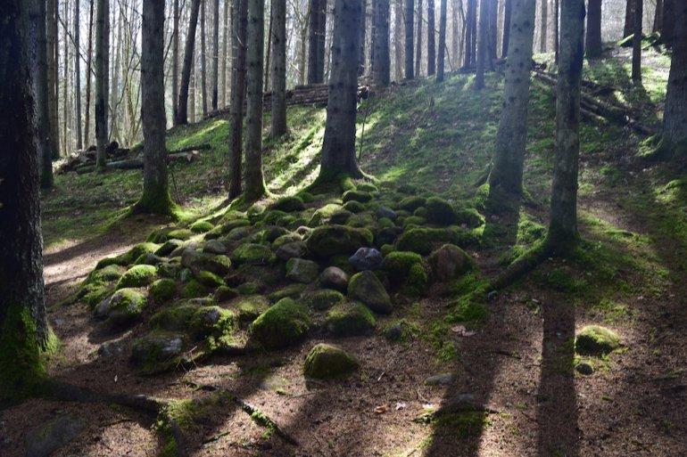 Покайнский лес, его аномалии, теплые камни и подземные свечения