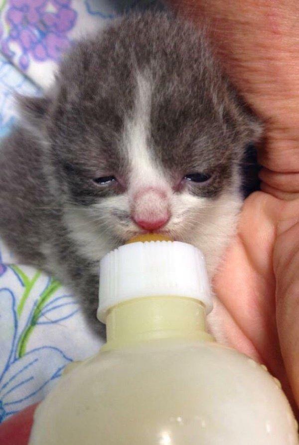 Женщина не позволила усыпить троих котят и подарила им королевскую жизнь