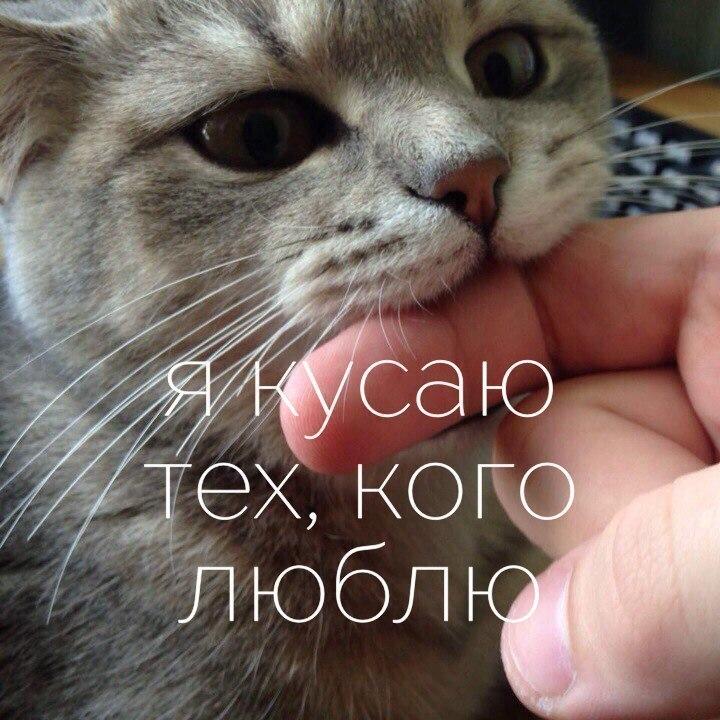 Очаровательные котейки в све…