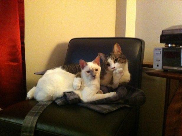 Эти  коты не ожидали, что вы…